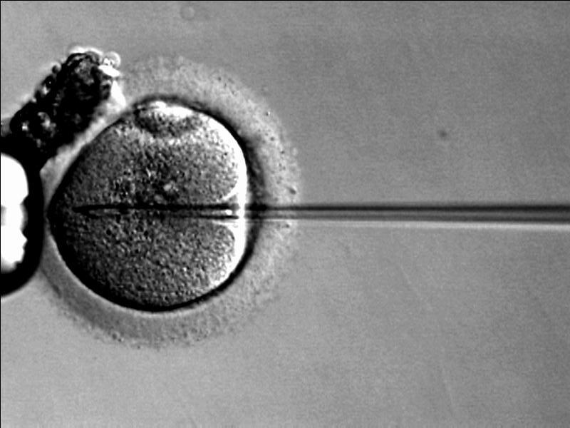 ocyte-criopreservación